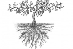 Old-Grapevine-Roots-